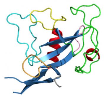 Ribonuclease mitogillin (Asp f I), mouse monoclonal antibody [clone PD7]